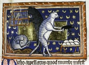 cats habits